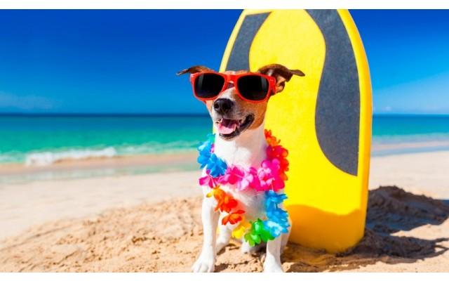 Пляжи для собак в Торревьехе