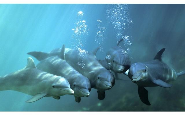 На берегу залива la Zorra нашли дельфина