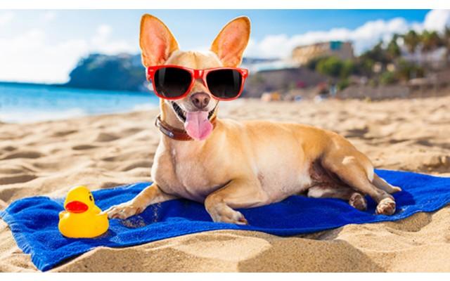 Пляж для собак между Torrevieja и Punta Prima
