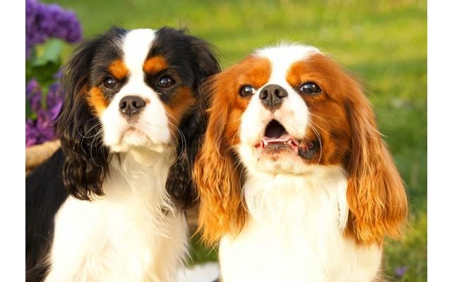 Документация для смены владельца вашей собаки