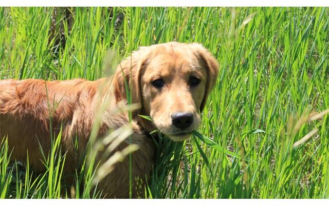 В Торревьехе наркоторговец заплатит за лечение двух домашних собак