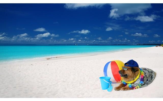 Жители Торревьехи сами определят месторасположение пляжей для собак