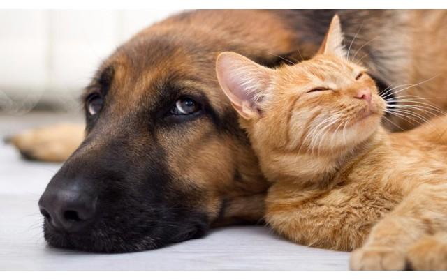 Приют собак и котов в Торревьехе