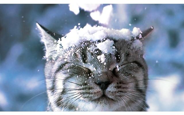 Похолодание в Торревьехе. Возможен снег!
