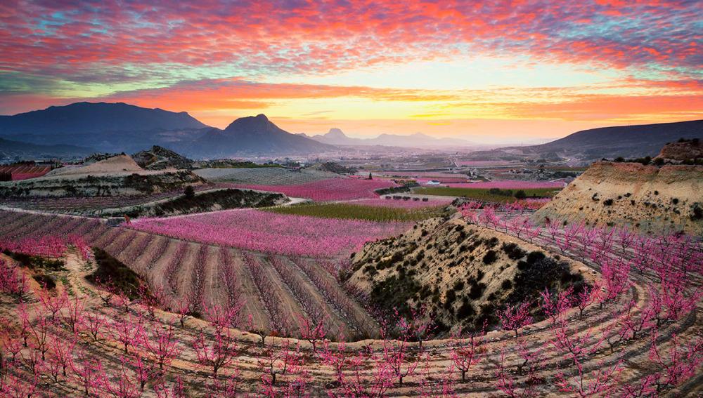 Цветение в Испании: буйство красок и ароматов в Сиесе, Мурсия