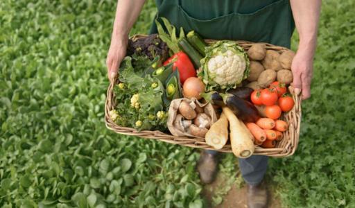 Безработные в Испании смогут работать без потери пособия: правительство открывает 75 000 вакансий в сельском хозяйстве