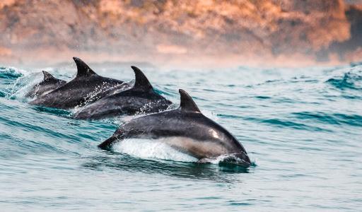 Киты, дельфины и морские черепахи все чаще появляются у берегов Валенсийского сообщества и Мурсии