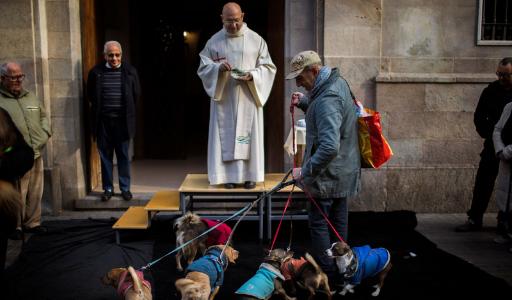 Праздник святого Антония в Испании – покровителя домашних животных