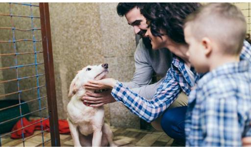 В 2020 году жители Валенсийского сообщества стали активнее обзаводиться собаками