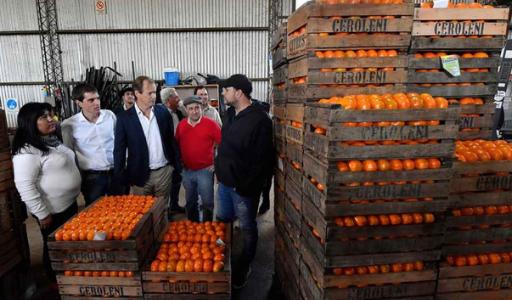 В Валенсийском сообществе увеличились продажи апельсинов